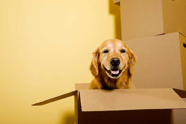 Pet Relocation Services image